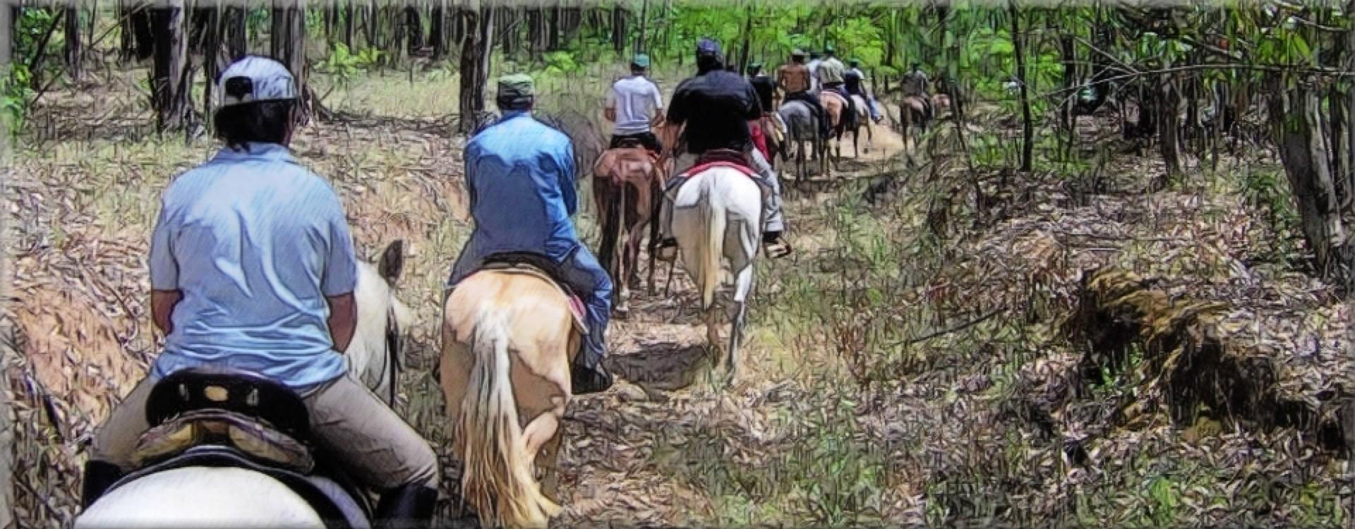 Escursioni a cavallo tra i boschi di faggio